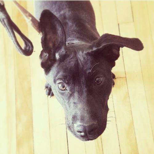epilepsy rescue dog